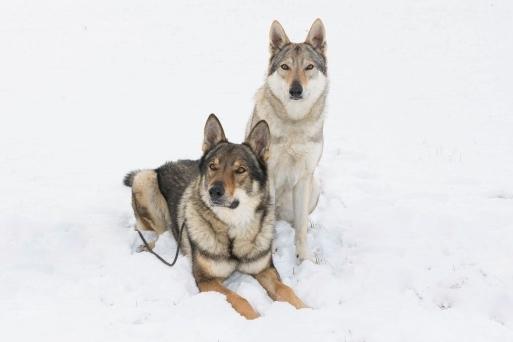 Kouzlo vlků