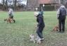 Poslušnost - ovladatelnost psa na vodítku (2 měsíce)