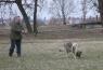 Stopy Goran z Deštné hory ( 3 roky a 2 měsíce ) vypracování vlastní stopy